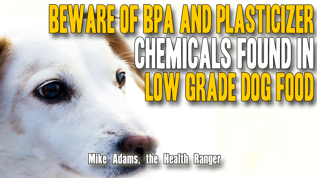 Image: Beware of BPA and plasticizer chemicals found in low grade dog food (Video)