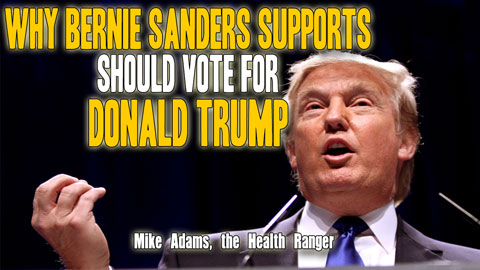 Image: Why Bernie Sanders supporters should vote for Donald Trump (Audio)