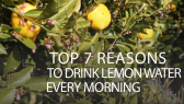 Top 7 Reasons to Drink Lemon Water Every Morning
