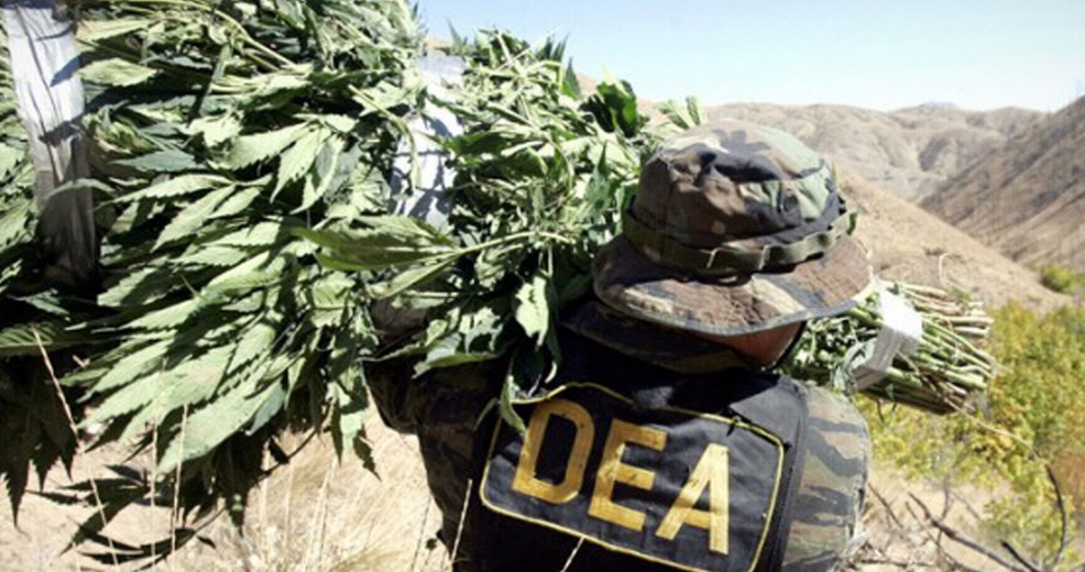 Image: Is the DEA criminalizing CBD oil in crazy power grab? (Video)