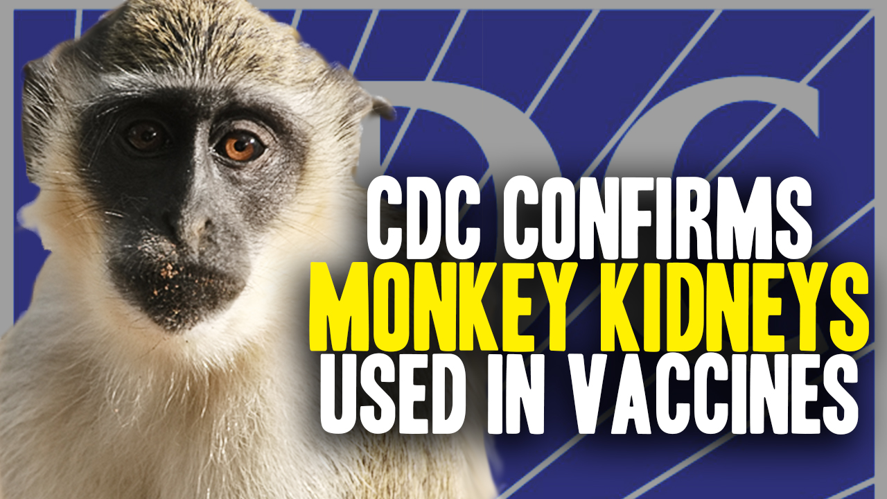 Image: CDC Confirms Diseased Monkey Kidney Cells Used in Vaccines (Video)