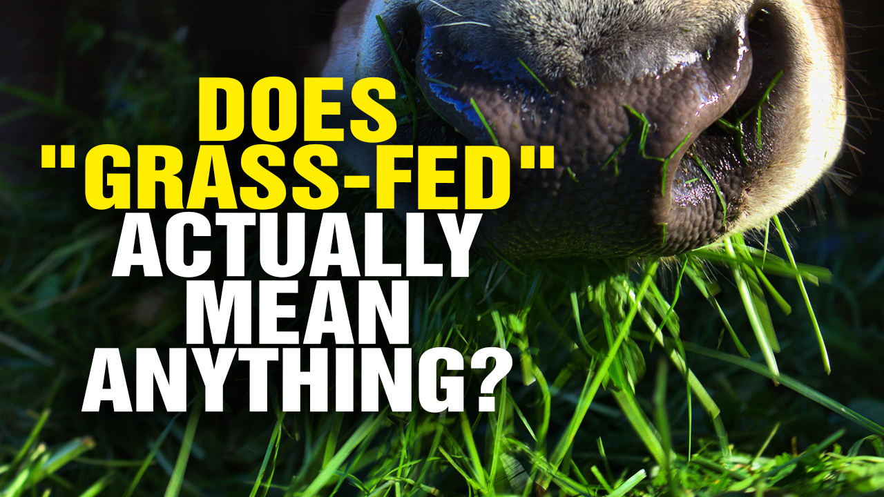 Image: Does GRASS-FED Actually Mean Anything? (Video)